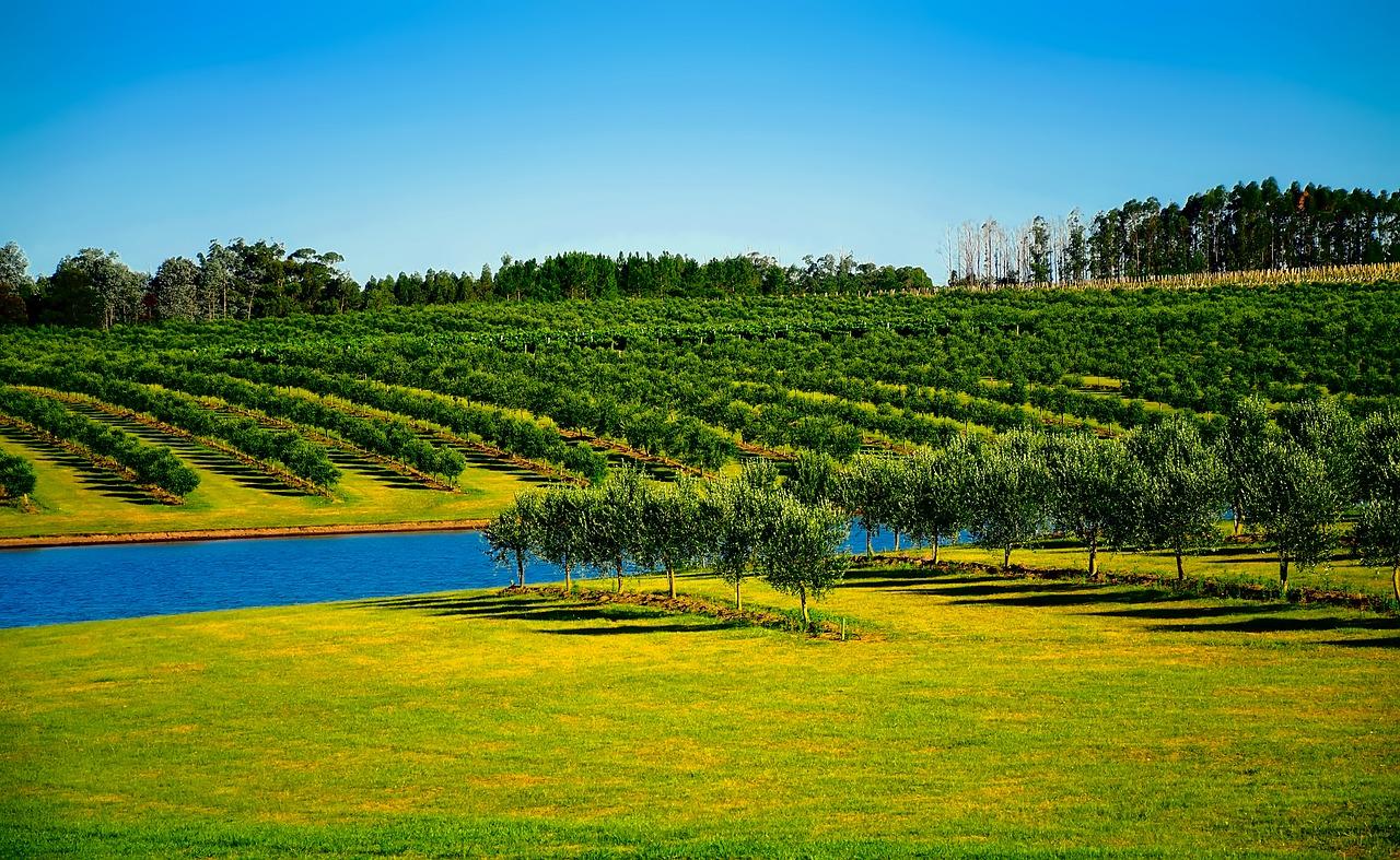 Co trzeba wiedzieć o Urugwaju